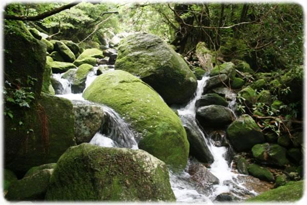 屋久島もののけ姫の森風景